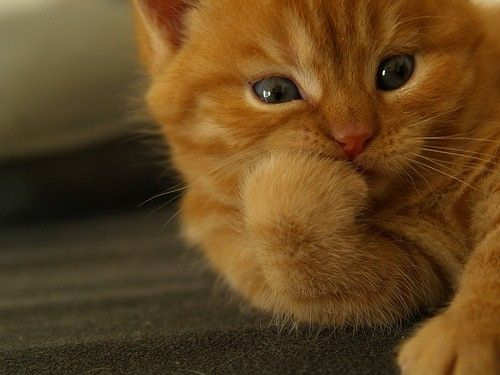 """Get it, the cat is """"biting"""" its nails"""